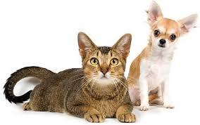 【国内最大級】ペットのドラッグストア「ペットゴー」5つの特典と魅力を紹介