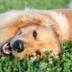 犬の健康診断の検査項目7つと費用の目安