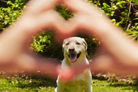 犬の健康診断と一緒に受けておきたいワクチンについて