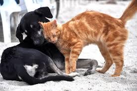 犬のフィラリアと犬猫のノミダニ予防は必須!予防方法と値段は?
