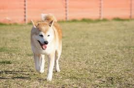 フリーランスや在宅ワークの人におすすめの犬種12選