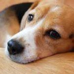 犬にお留守番をさせる時に気を付けるポイント