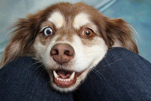 犬が虫歯になった?犬の虫歯の症状と解決法について