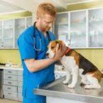 ジュイクルの使い方は?獣医往診サービスの登録方法と便利な機能!口コミも紹介