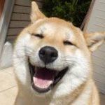 犬のトイレのしつけがうまくいかない!正しいしつけと絶対NGなトイレのしつけ方法を紹介