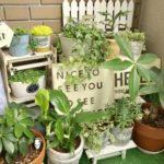 多肉植物を飾るための寄せ植えの作り方