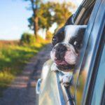 犬の噛み癖の原因と対処法