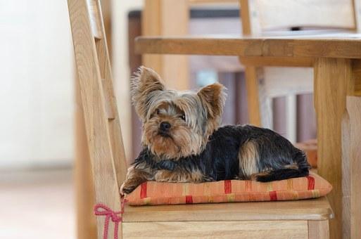 犬にダニがついていた場合の処置は自宅でできる?対策方法と注意点