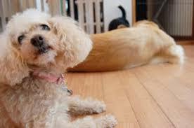 犬の留守番中の盗み食い
