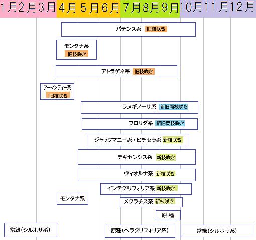 クレマチス開花カレンダー系統別