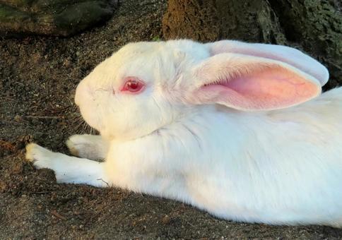 ウサギが屁は病気のサイン?ウサギがおならをするときに注意したいこと